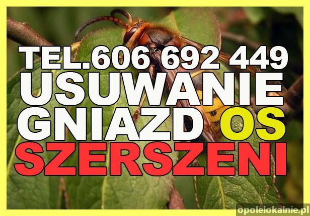 Usuwanie gniazd os, szerszeni, likwidacja - 7 dni w tygodniu Opolskie